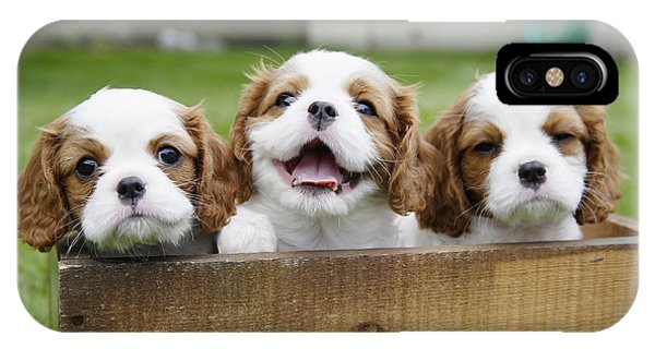 Three Cocker Spaniels Peeking IPhone Case
