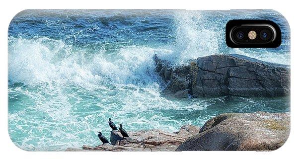 Three Cormorants At Monument Cove, Acadia National Park IPhone Case
