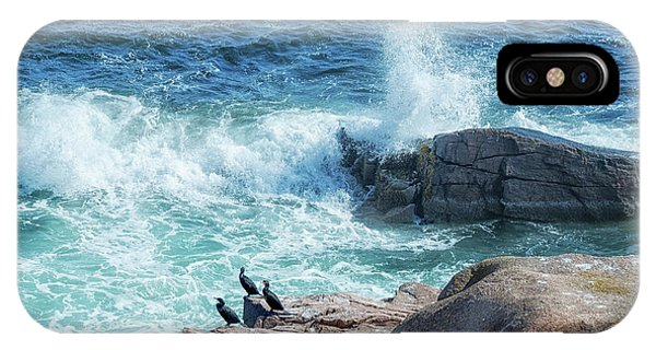 Three Cormorants At Monument Cove, Acadia National Park IPhone Case