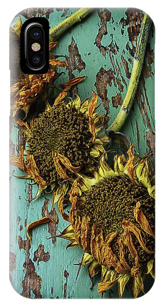 Three Dried Sunflowers IPhone Case