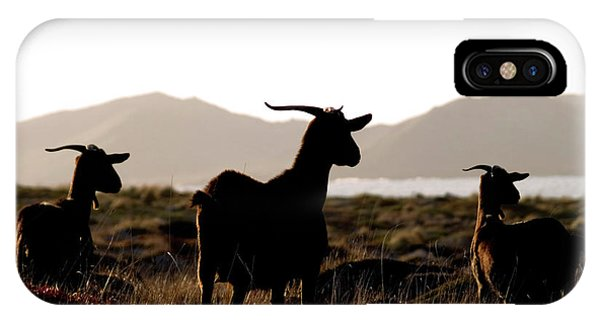 Three Goats IPhone Case
