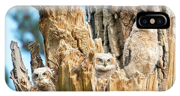 Three Great Horned Owl Babies IPhone Case