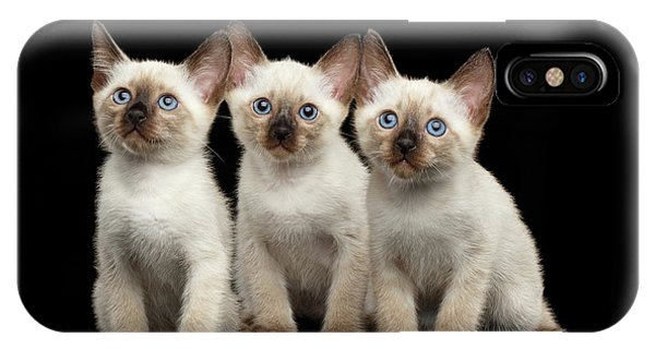 Three Kitty Of Breed Mekong Bobtail On Black Background IPhone Case