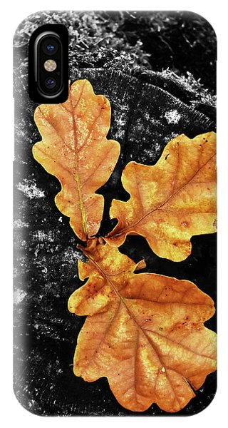 Equal iPhone Case - Three Leaves On A Stump by Mihaela Pater