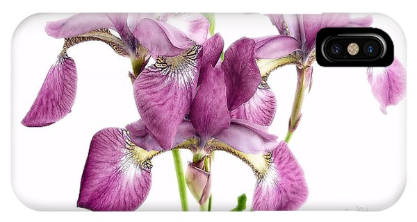 Three Mauve Japanese Irises IPhone Case