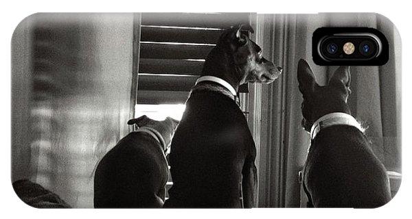Three Min Pin Dogs IPhone Case