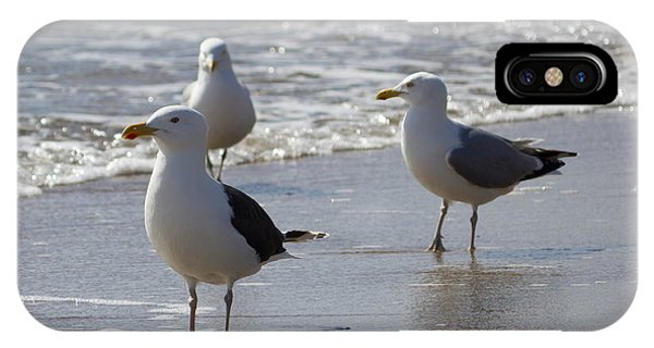 Three Of A Kind - Seagulls IPhone Case