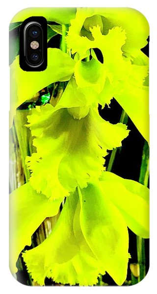Three Orchids In Yellow IPhone Case