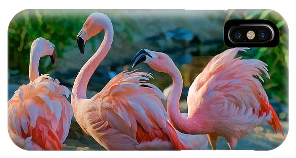 Three Pink Flamingos Strutting Their Stuff IPhone Case