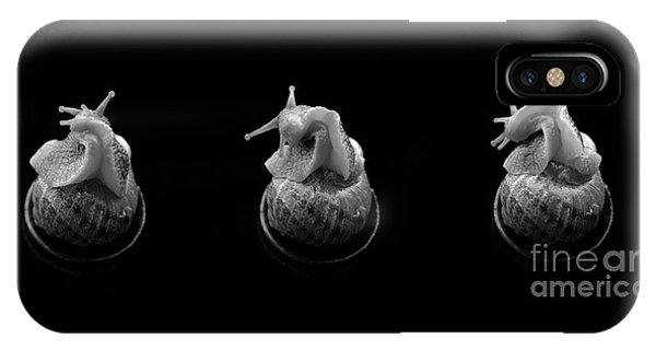 Three Snails IPhone Case