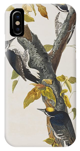 Three Toed Woodpecker IPhone Case