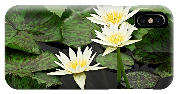 Three Water Lilies IPhone Case