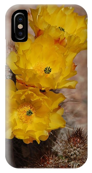 Three Yellow Cactus Flowers IPhone Case