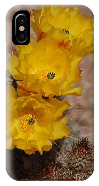 Three Yellow Cactus Flowers IPhone Case