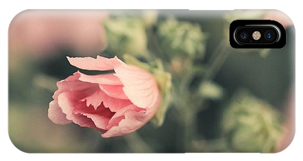 Petals iPhone Case - Thüringer Strauchpappel (lavatera by Mandy Tabatt