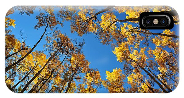iPhone Case - Through The Aspens by Vince McCall