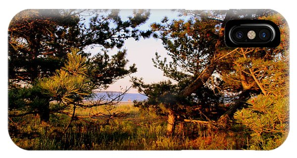 Through The Pine Grove IPhone Case