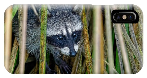 Through The Reeds - Raccoon IPhone Case