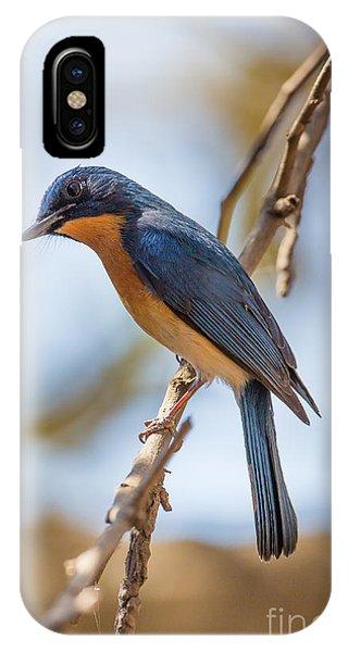 Tickells Blue Flycatcher, India IPhone Case