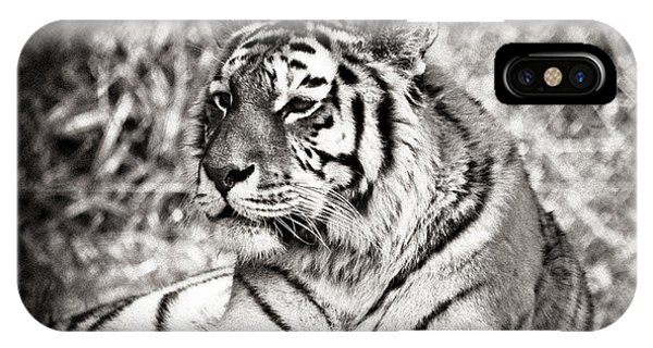 Tiger Phone Case by Angela Aird