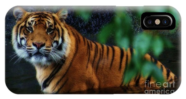 Tiger Land IPhone Case