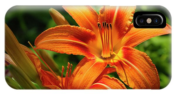 Tiger Lily Explosion IPhone Case