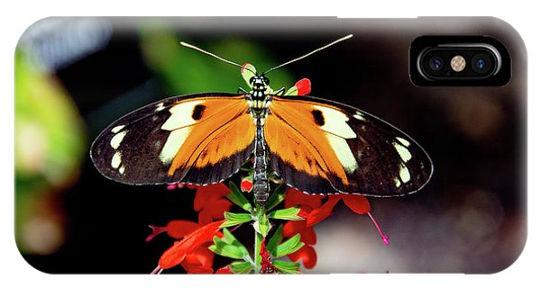 Tiger Longwing Butterfly IPhone Case