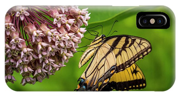 Tiger Swallowtail #210 IPhone Case