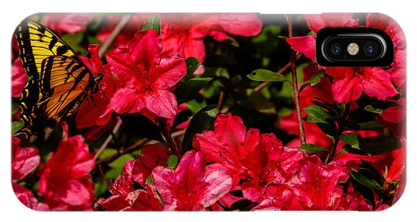 Tiger Swallowtail On A Red Azalea IPhone Case