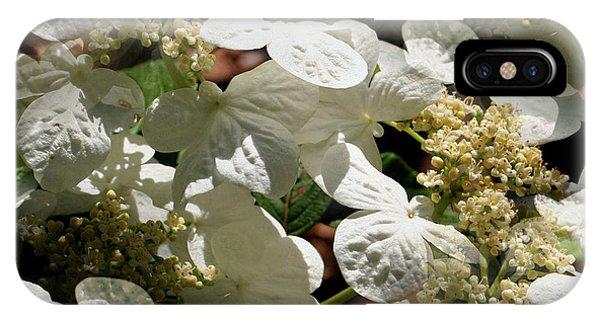 Tiled White Lace Cap Hydrangeas IPhone Case