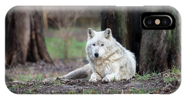 IPhone Case featuring the photograph Timber Wolf by Andrea Silies