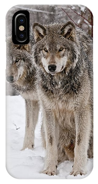 Timber Wolves In Winter IPhone Case