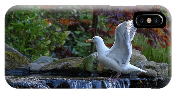 Time For A Bird Bath IPhone Case