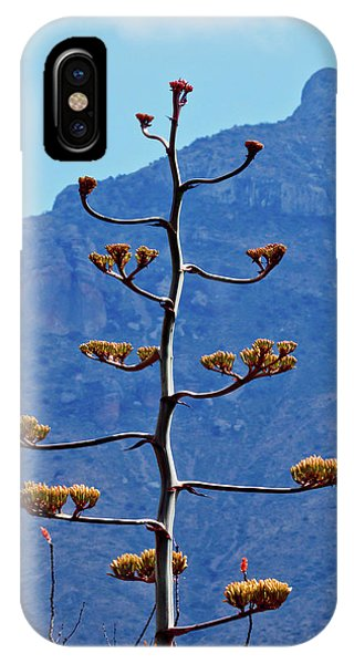 Middle Of Nowhere iPhone Case - Time To Bloom by Linda Unger
