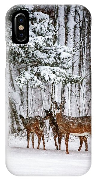 White Tailed Deer iPhone Case - Time To Go by Karol Livote