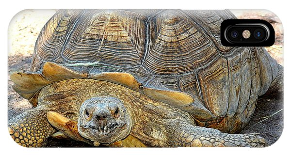 Timothy The Giant Tortoise IPhone Case