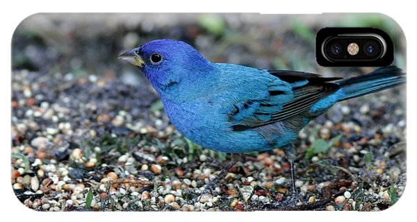 Tiny Indigo Bunting IPhone Case
