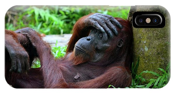 Tired Female Orangutan Ape Rests Against Tree With Hand On Her Head IPhone Case