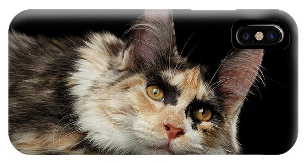 Tired Maine Coon Cat Lie On Black Background IPhone Case