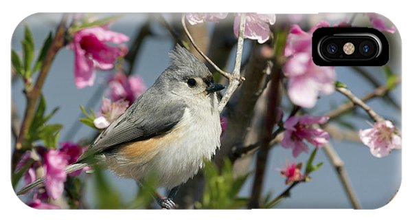Titmouse And Peach Blossoms IPhone Case