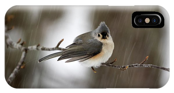Titmouse During Snow Storm IPhone Case
