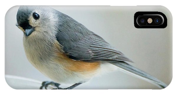 Titmouse With Walnuts IPhone Case