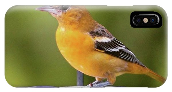 To Remind Us Of Summer, A Juvenile IPhone Case