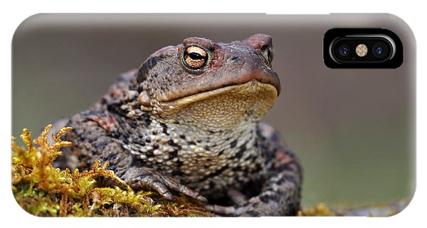 IPhone Case featuring the photograph Toad by Gavin Macrae