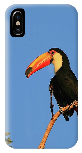 Toco Toucan IPhone Case