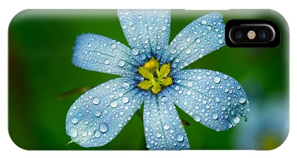 Top View Of A Blue Eyed Grass Flower IPhone Case
