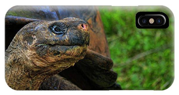 Tortoise IPhone Case