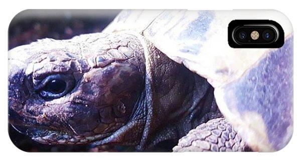 #tortoise #torts #sunbathing #basking Phone Case by Natalie Anne