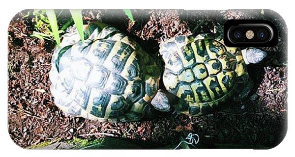 #tortoise #torts #sunbathing #garden Phone Case by Natalie Anne