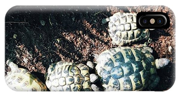 #torts #tortoise #sunbathing #shell Phone Case by Natalie Anne